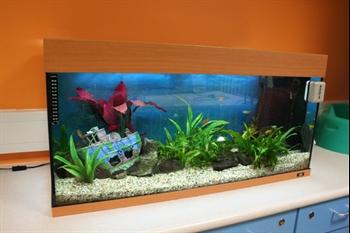 Fish tank on Ocean ward
